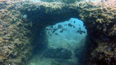 les termes xabia buceo